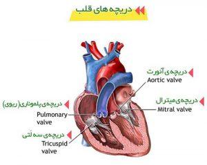 علائم بیماری قلبی و درمان آن